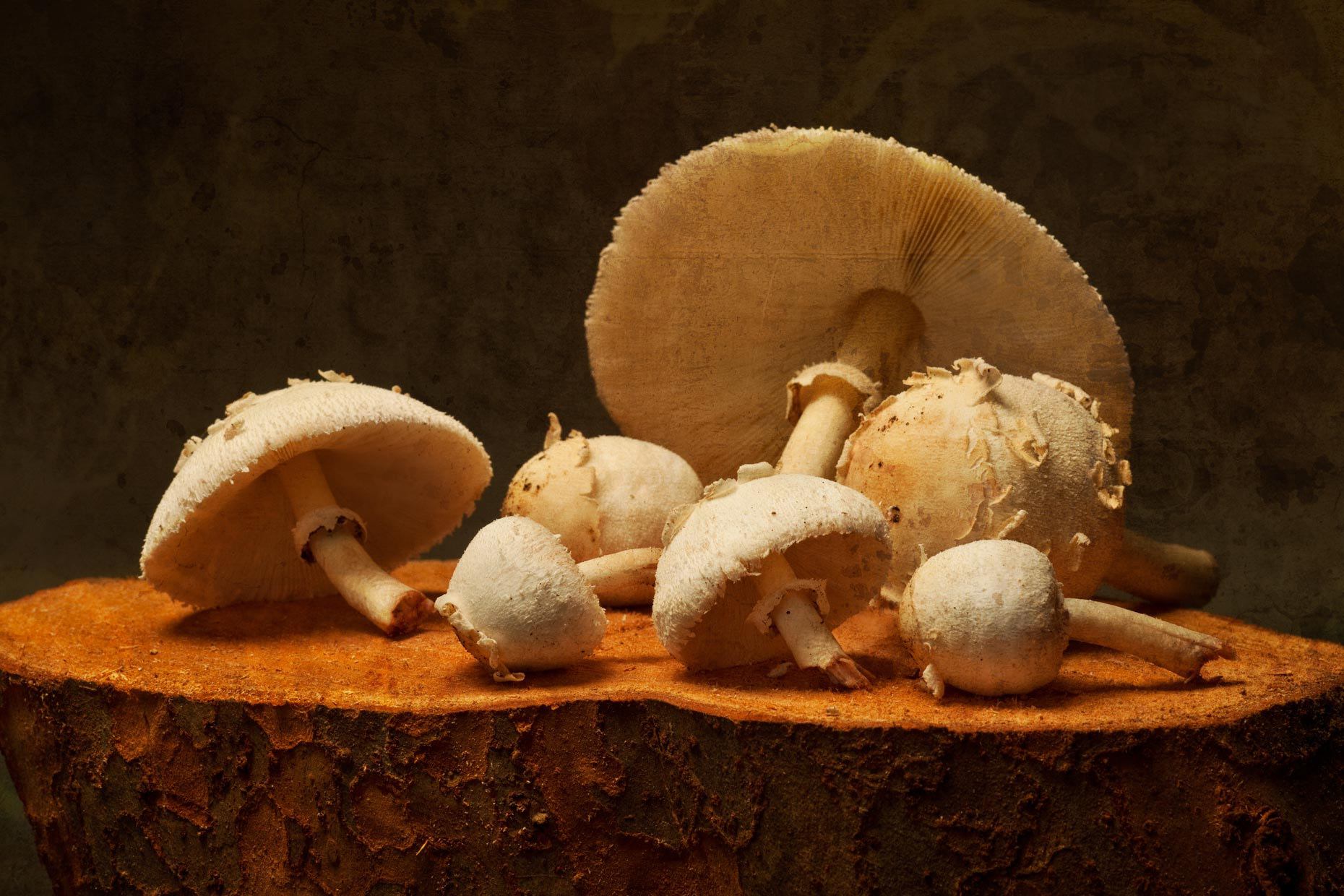 Orlando Professional Food Photography | Mushrooms